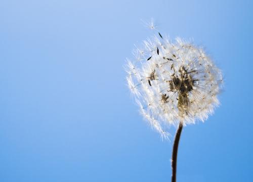 Uważność uwaznosc jak cwiczyc samodzielnie mindfulness1