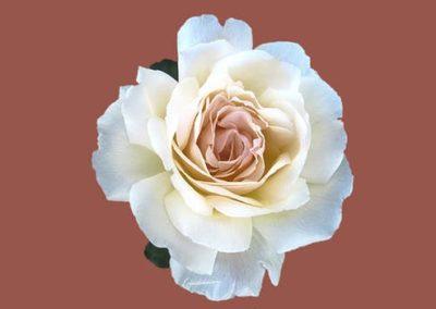 Róża  Grupa 2017 Uważność Poniedziałek R    a 400x284